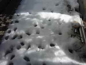 Snow01_4
