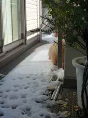 Snow03_2